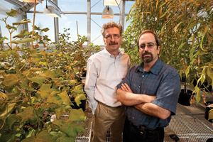 Vladimir Shulaev and Ron Mittler, Signaling Mechanisms in Plants cluster faculty, are internationally renowned in the field of plant science. (Photo by Jonathan Reynolds)