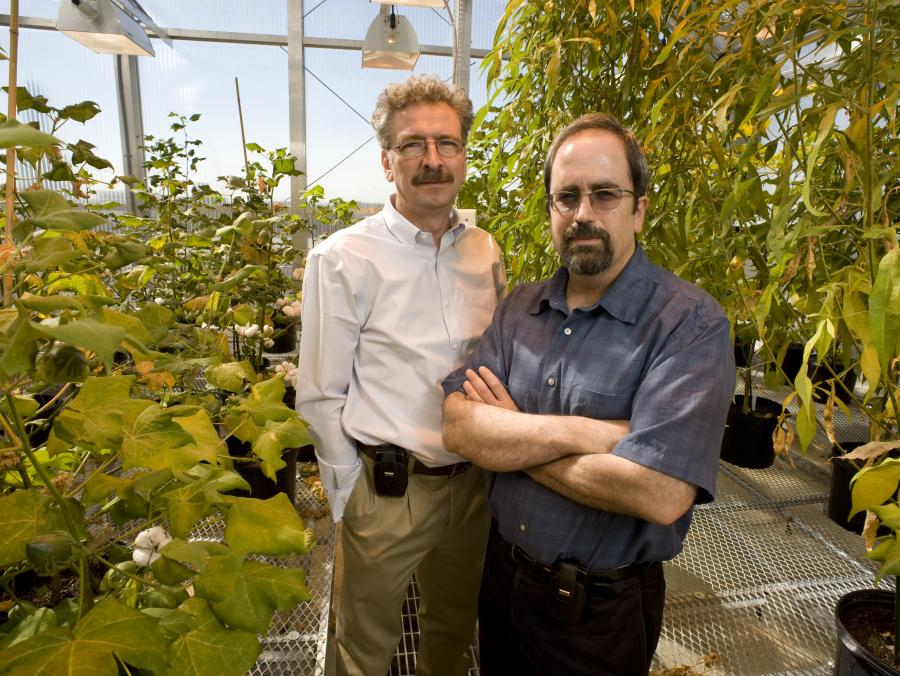 <p>Vladimir Shulaev and Ron Mittler standing in greenhouse</p>