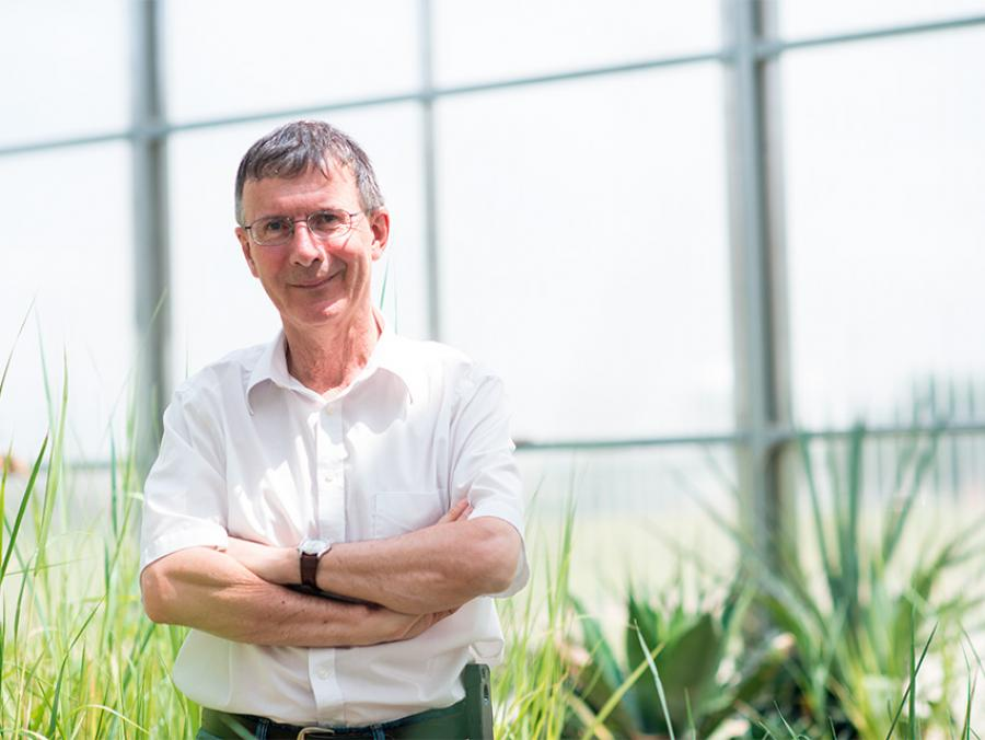 Richard Dixon in a UNT greenhouse
